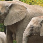 elephants-wuppertal-947592_640